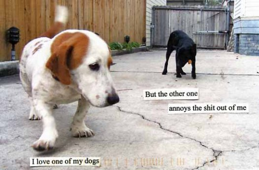 annoys